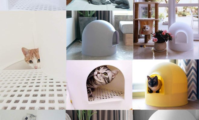 cat litter box for odor control